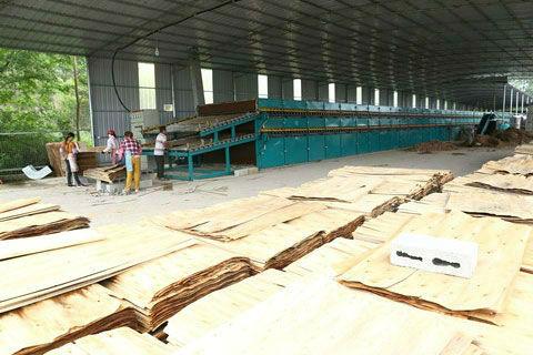 杨木单板干燥机