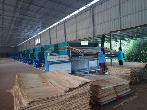 单板干燥机厂家