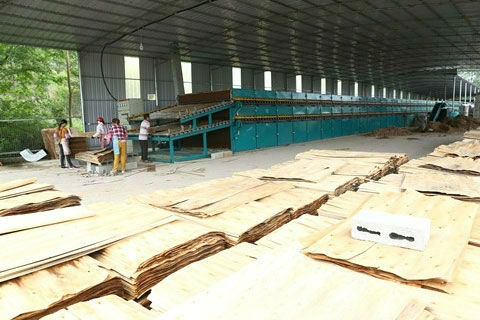 湘西杨木单板干燥机